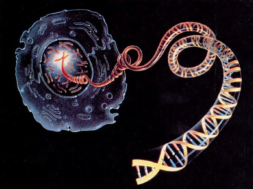 PREDISPOSIZIONE GENETICA Esposizione ambientale: fumo di tabacco, composti chimici, radiazioni, polveri inquinanti.