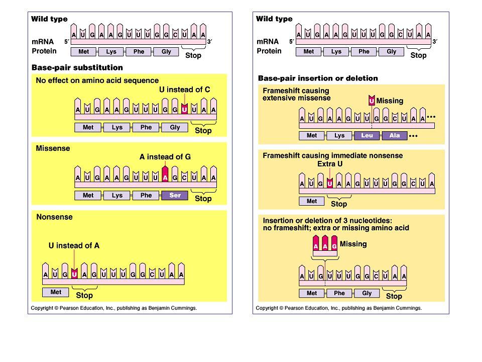 Variazioni comuni della sequenza del DNA nella popolazione (<1%) sono state classficate come polimorfismi a singolo nucleotide (SNPs).