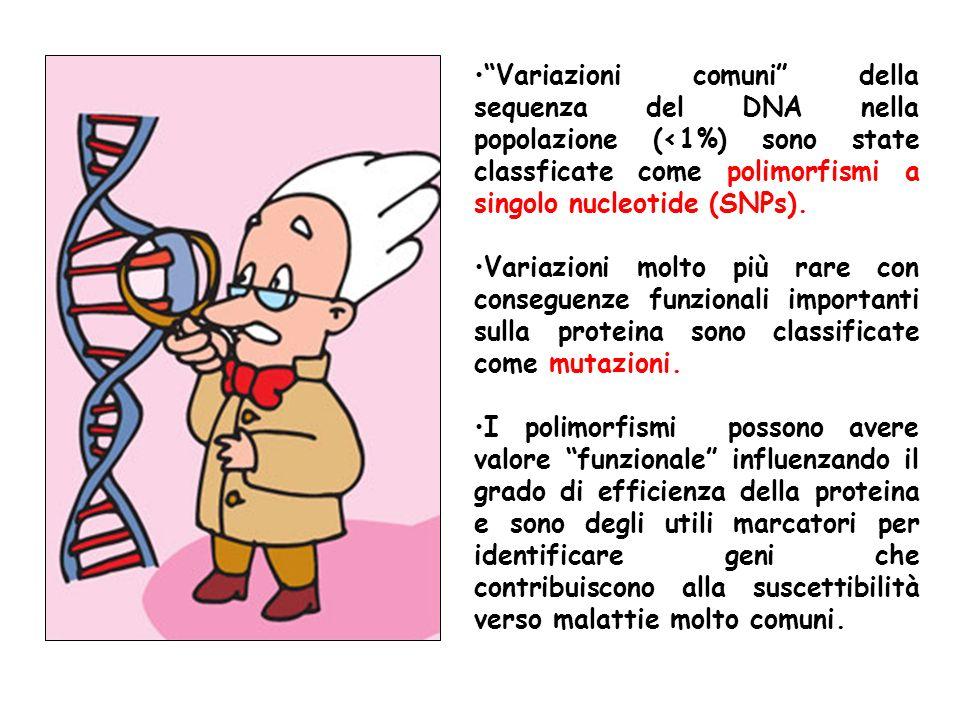 COSTITUZIONE GENETICA