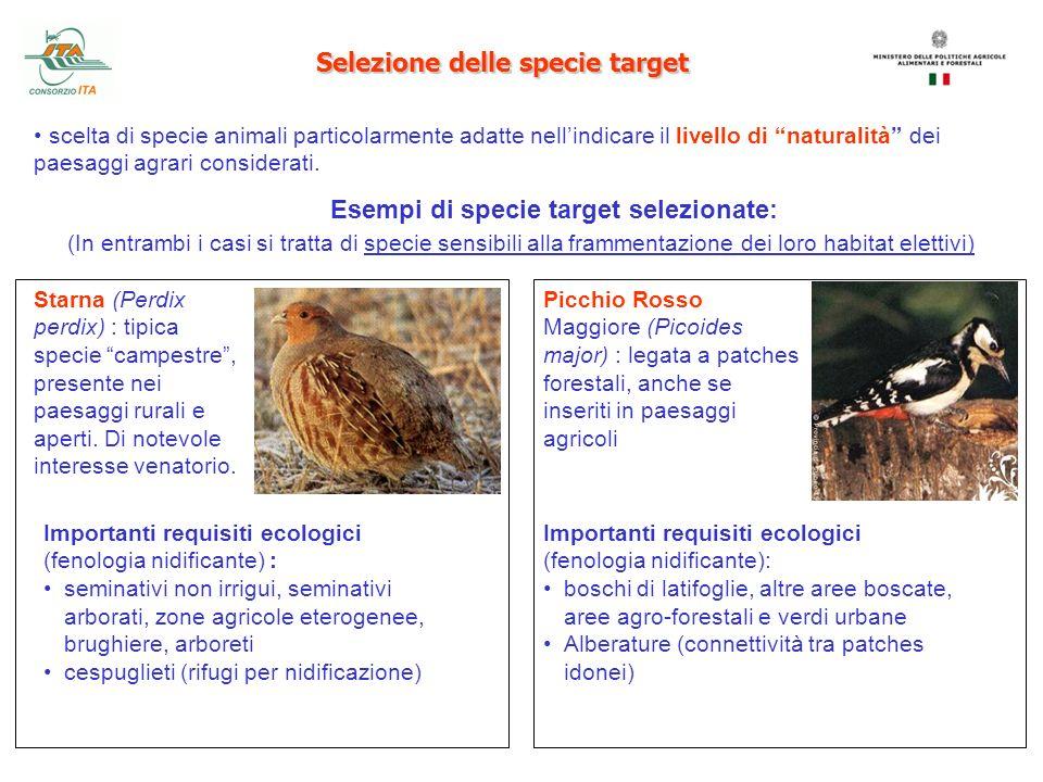 Selezione delle specie target scelta di specie animali particolarmente adatte nellindicare il livello di naturalità dei paesaggi agrari considerati. E