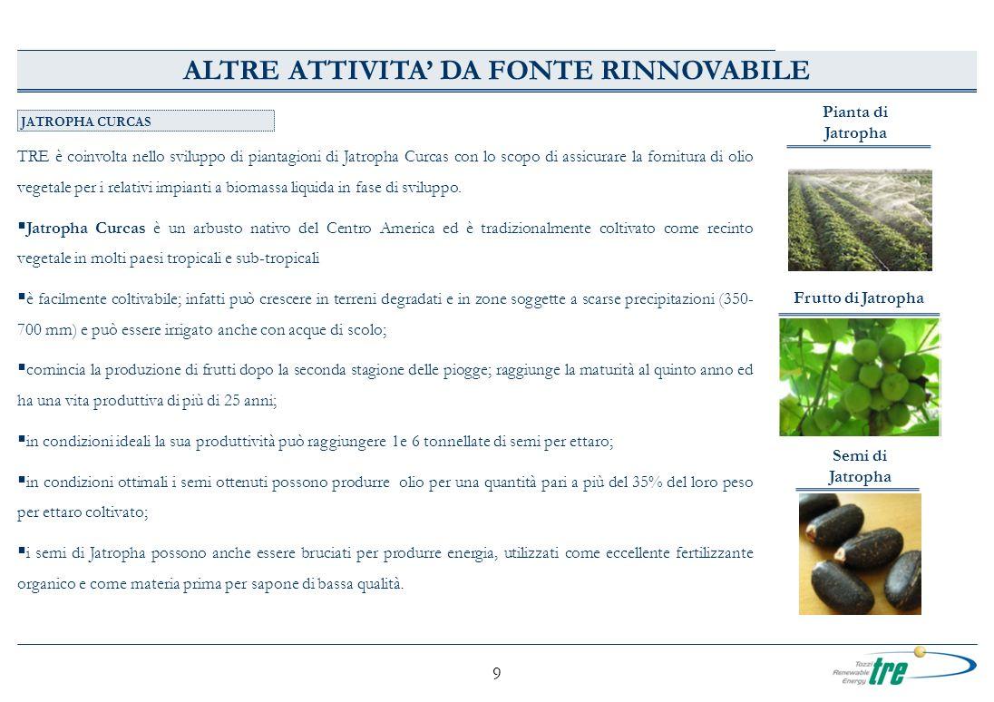 9 JATROPHA CURCAS TRE è coinvolta nello sviluppo di piantagioni di Jatropha Curcas con lo scopo di assicurare la fornitura di olio vegetale per i rela