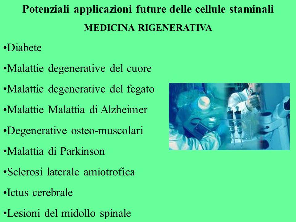 Potenziali applicazioni future delle cellule staminali MEDICINA RIGENERATIVA Diabete Malattie degenerative del cuore Malattie degenerative del fegato
