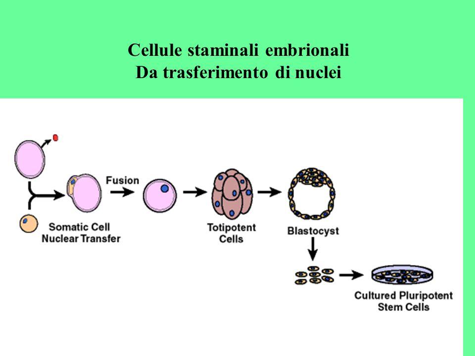 Da trasferimento di nuclei