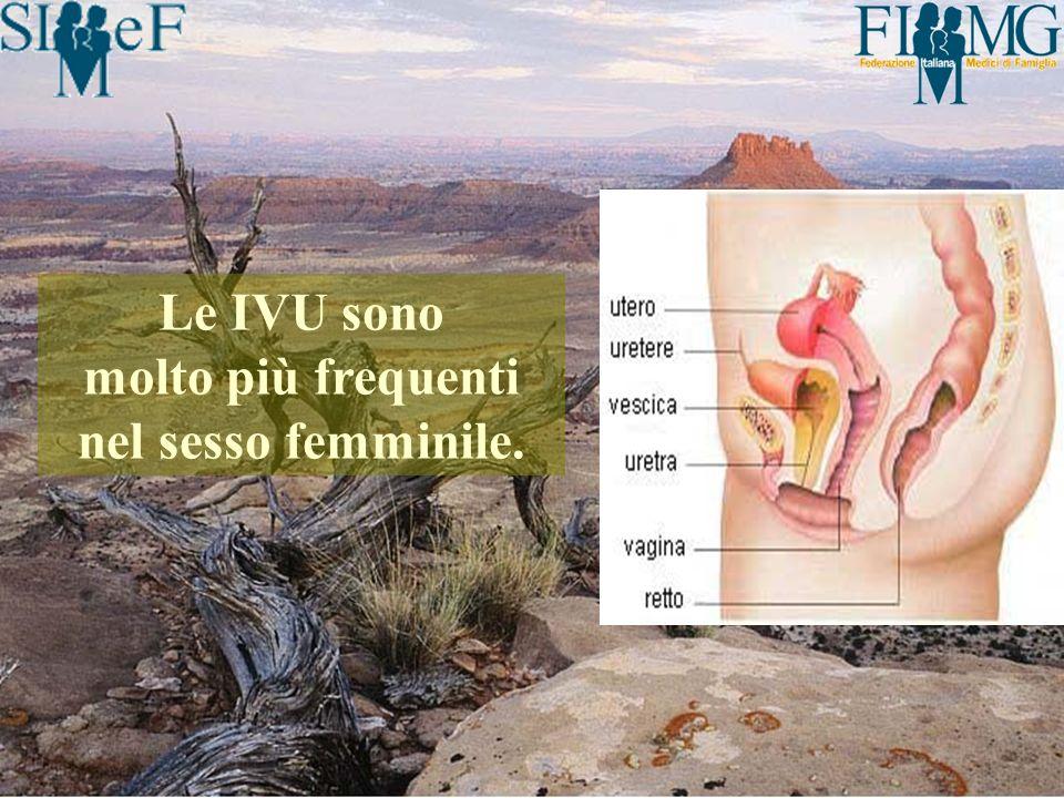 Uninfezione delle vie urinarie (IVU) può essere definita come: presenza di batteri nelle urine (batteriuria) in associazione ad una reazione infiammatoria dellospite.
