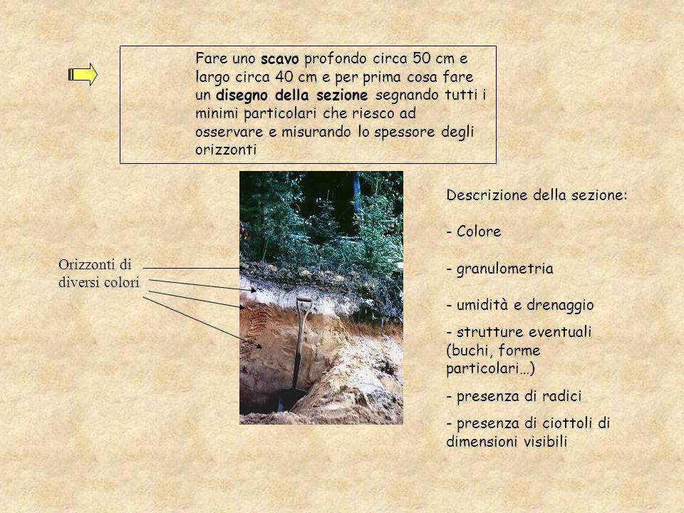 Fare uno scavo profondo circa 50 cm e largo circa 40 cm e per prima cosa fare un disegno della sezione segnando tutti i minimi particolari che riesco