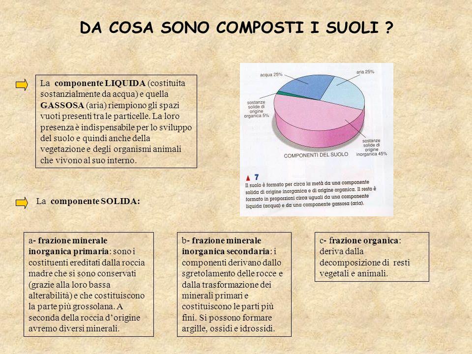 c- frazione organica: deriva dalla decomposizione di resti vegetali e animali. a- frazione minerale inorganica primaria: sono i costituenti ereditati