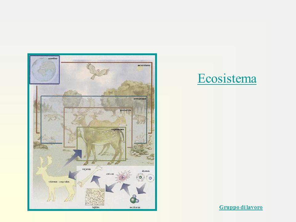 Ecosistema Gruppo di lavoro