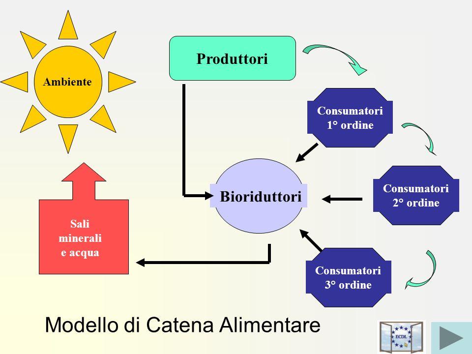 Ambiente Produttori Consumatori 1° ordine Consumatori 2° ordine Consumatori 3° ordine Bioriduttori Sali minerali e acqua Modello di Catena Alimentare