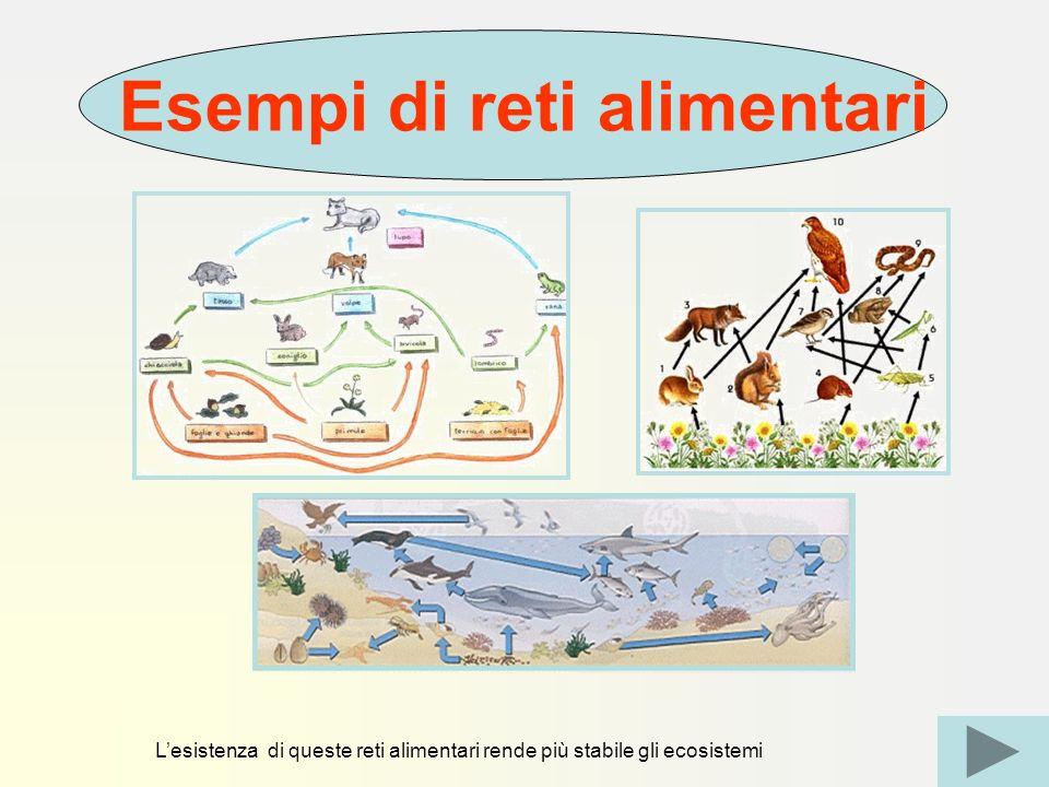 Lesistenza di queste reti alimentari rende più stabile gli ecosistemi Esempi di reti alimentari