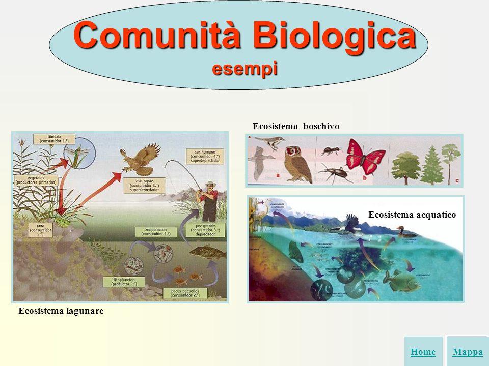 Comunità Biologica esempi Ecosistema boschivo HomeMappa Ecosistema acquatico Ecosistema lagunare