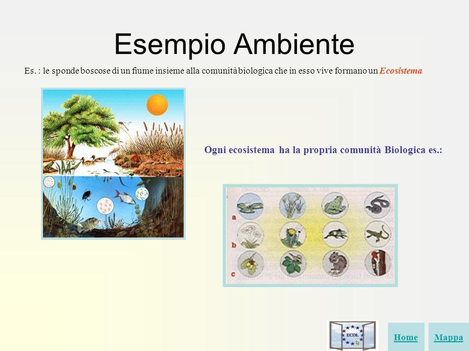 Esempio Ambiente Es. : le sponde boscose di un fiume insieme alla comunità biologica che in esso vive formano un Ecosistema Ogni ecosistema ha la prop