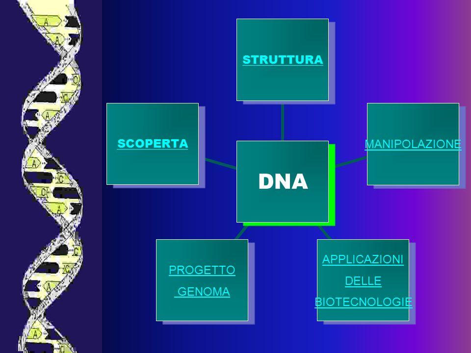 Scoperta DNA 1928 ESPERIMENTO DI GRIFFITH CON PNEUMOCOCCHI SCOPERTA DEL FATTORE TRASFORMANTERESPONSABILE DELLA VARIAZIONE EREDITARIA 1944 IDENTIFICAZIONE DEL FATTORE TRASFORMANTE COME DNA 1952 ESPERIMENTO CON BATTERIOFAGI FATTO DAI BIOLOGI HERSHEY E CHASE: IL DAN E RESPONSABILE DELLA TRASMISSIONE EREDITARIA 1950 STUDI DI DIFFRAZIONE DEI RAGGI X SU MICROCRISTALLI DI DNA, IMPORTANTI INFORMAZIONI SULLA STRUTTURA A ELICA.