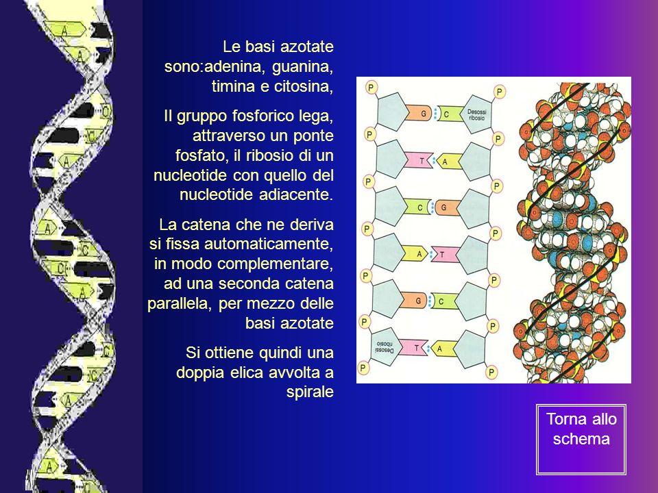 Decifrazione del codice genetico umano: migliore conoscenza delle malattie e migliore efficacia delle medicine.