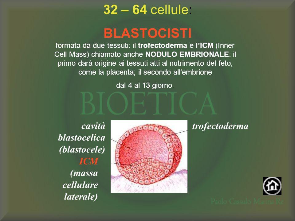 32 – 64 cellule: BLASTOCISTI trofectoderma cavità blastocelica (blastocele) ICM (massa cellulare laterale) formata da due tessuti: il trofectoderma e