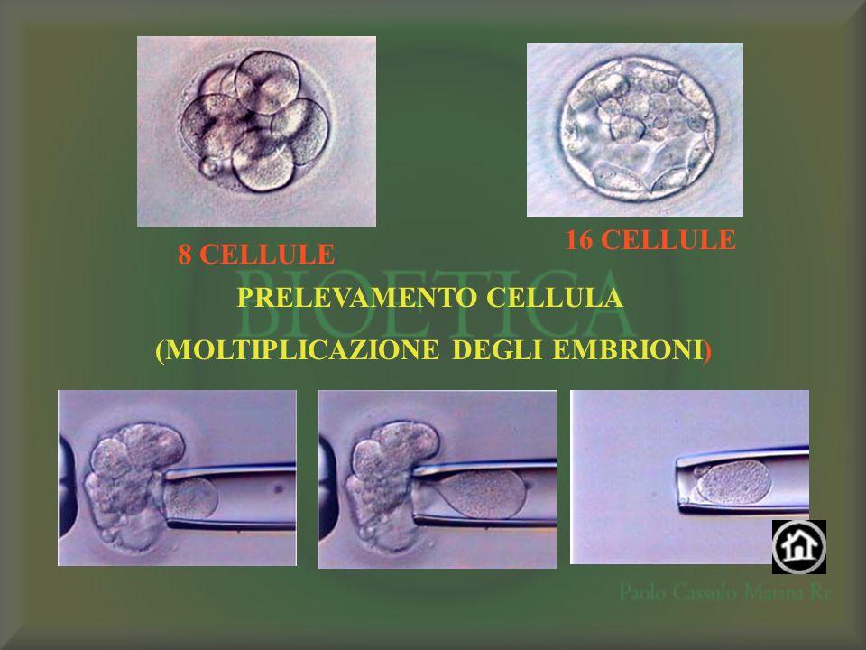 8 CELLULE 16 CELLULE PRELEVAMENTO CELLULA (MOLTIPLICAZIONE DEGLI EMBRIONI)