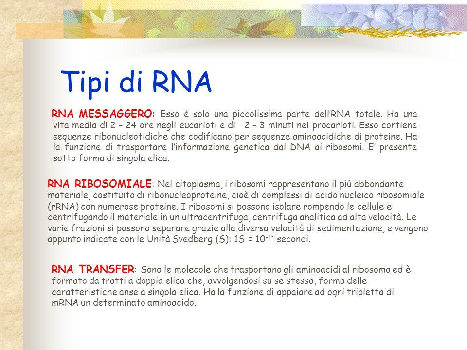 Struttura dellRNA LRNA ha struttura secondaria differente secondo la funzione del tipo di molecola. Ci sono tre tipi di RNA: 3 RNA messaggero 3 RNA tr