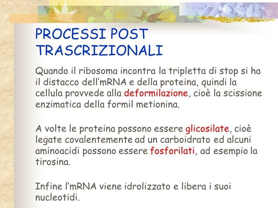 Sintesi proteica La sintesi proteica si compone di 3 passaggi: 3TRASCRIZIONE 3 TRADUZIONE 3 MODIFICAZIONI post-trascrizionali