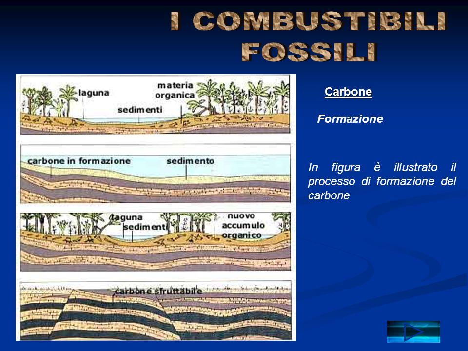 Formazione Carbone In figura è illustrato il processo di formazione del carbone