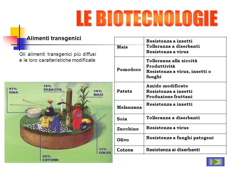 Alimenti transgenici Mais Resistenza a insetti Tolleranza a diserbanti Resistenza a virus Pomodoro Tolleranza alla siccità Produttività Resistenza a v