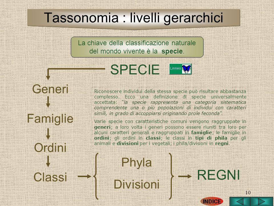 10 SPECIE Generi Famiglie Ordini Classi Phyla Divisioni REGNI La chiave della classificazione naturale del mondo vivente è la specie. Tassonomia : liv