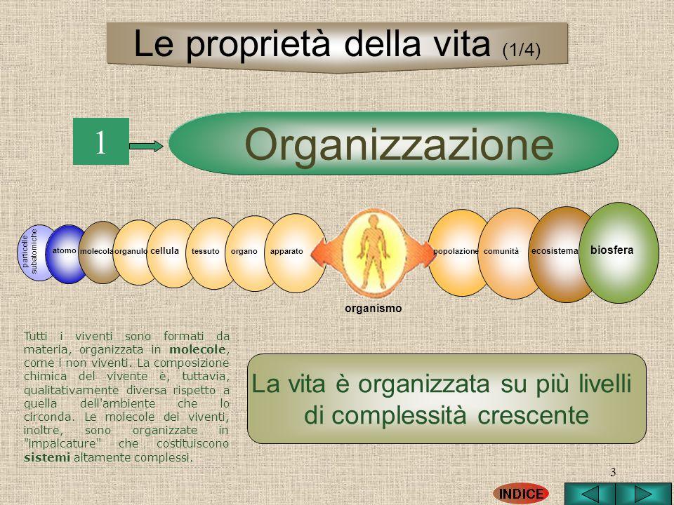 3 1 La vita è organizzata su più livelli di complessità crescente Organizzazione particelle subatomiche atomo molecolapopolazionecomunità ecosistema b