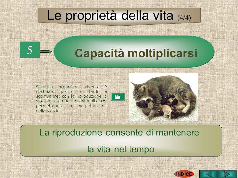 6 5 Capacità moltiplicarsi La riproduzione consente di mantenere la vita nel tempo Le proprietà della vita (4/4) Qualsiasi organismo vivente è destina