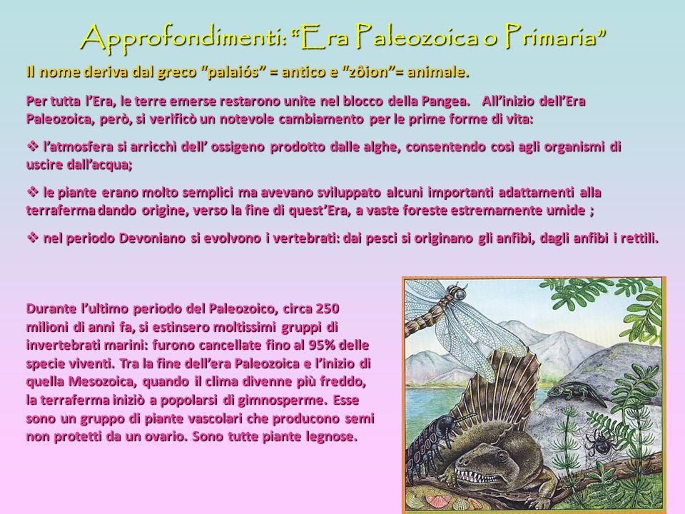 Approfondimenti: Era Paleozoica o Primaria Il nome deriva dal greco palaiós = antico e zôion= animale.