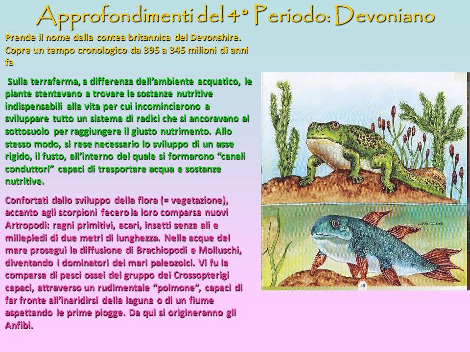 Approfondimenti del 4° Periodo: Devoniano Prende il nome dalla contea britannica del Devonshire. Copre un tempo cronologico da 395 a 345 milioni di an
