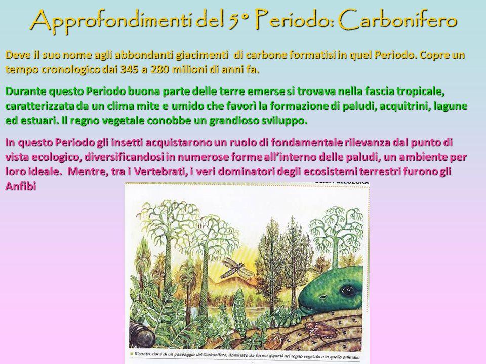 Approfondimenti del 5° Periodo: Carbonifero Deve il suo nome agli abbondanti giacimenti di carbone formatisi in quel Periodo. Copre un tempo cronologi