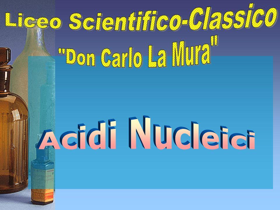 Acidi Nucleici Cosa sono ?Quali sono ?