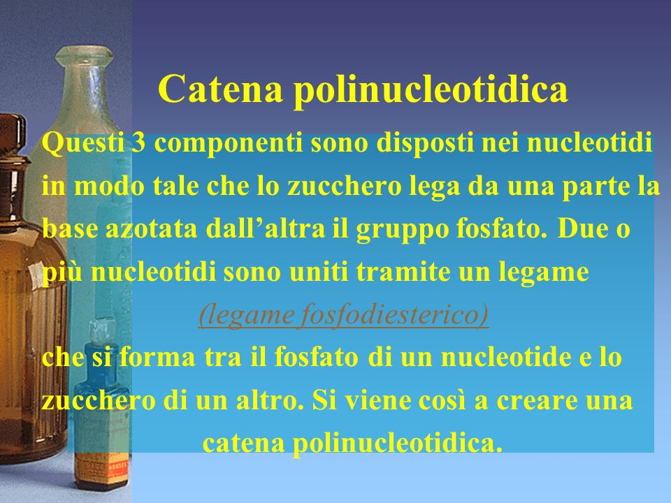 Catena polinucleotidica Questi 3 componenti sono disposti nei nucleotidi in modo tale che lo zucchero lega da una parte la base azotata dallaltra il g
