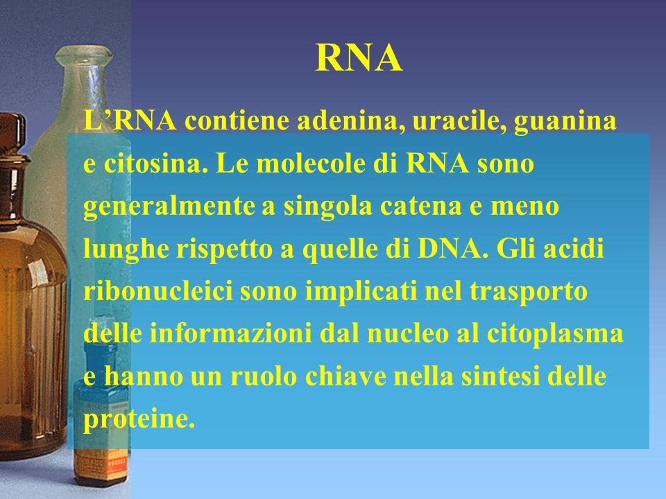 RNA LRNA contiene adenina, uracile, guanina e citosina. Le molecole di RNA sono generalmente a singola catena e meno lunghe rispetto a quelle di DNA.