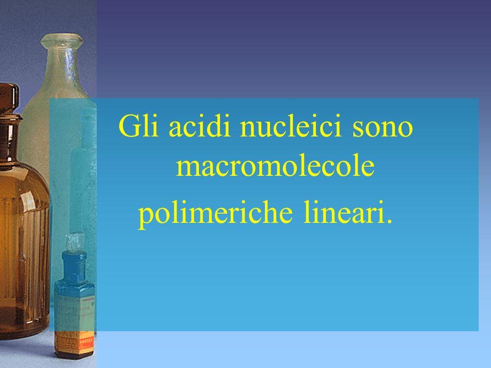 Gli acidi nucleici sono macromolecole polimeriche lineari.