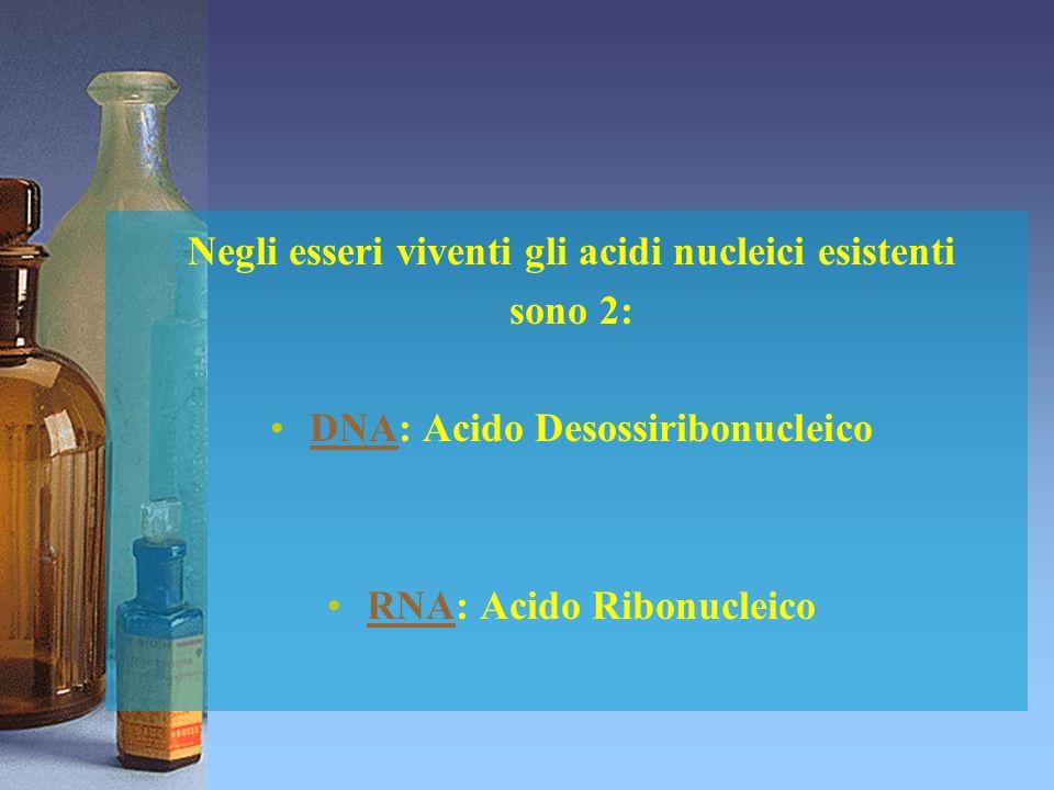 Negli esseri viventi gli acidi nucleici esistenti sono 2: DNA: Acido Desossiribonucleico RNA: Acido Ribonucleico