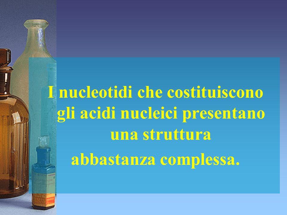 I nucleotidi che costituiscono gli acidi nucleici presentano una struttura abbastanza complessa.