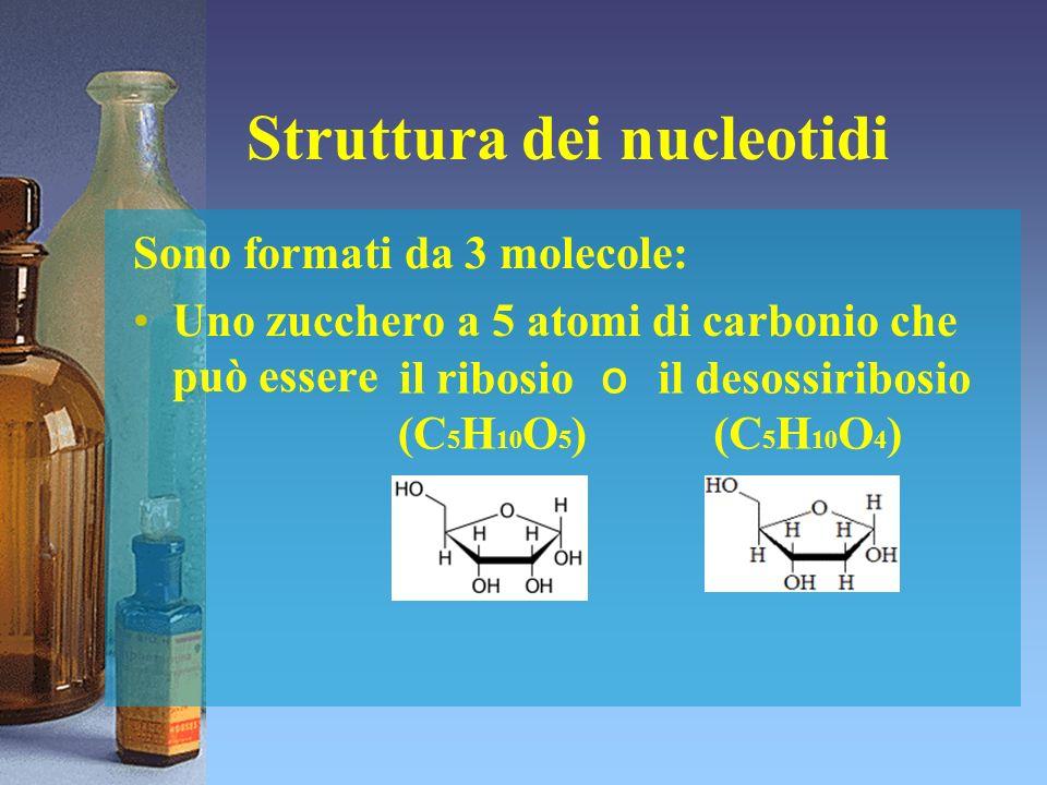 Struttura dei nucleotidi Sono formati da 3 molecole: Uno zucchero a 5 atomi di carbonio che può essere il ribosio (C 5 H 10 O 5 ) il desossiribosio (C