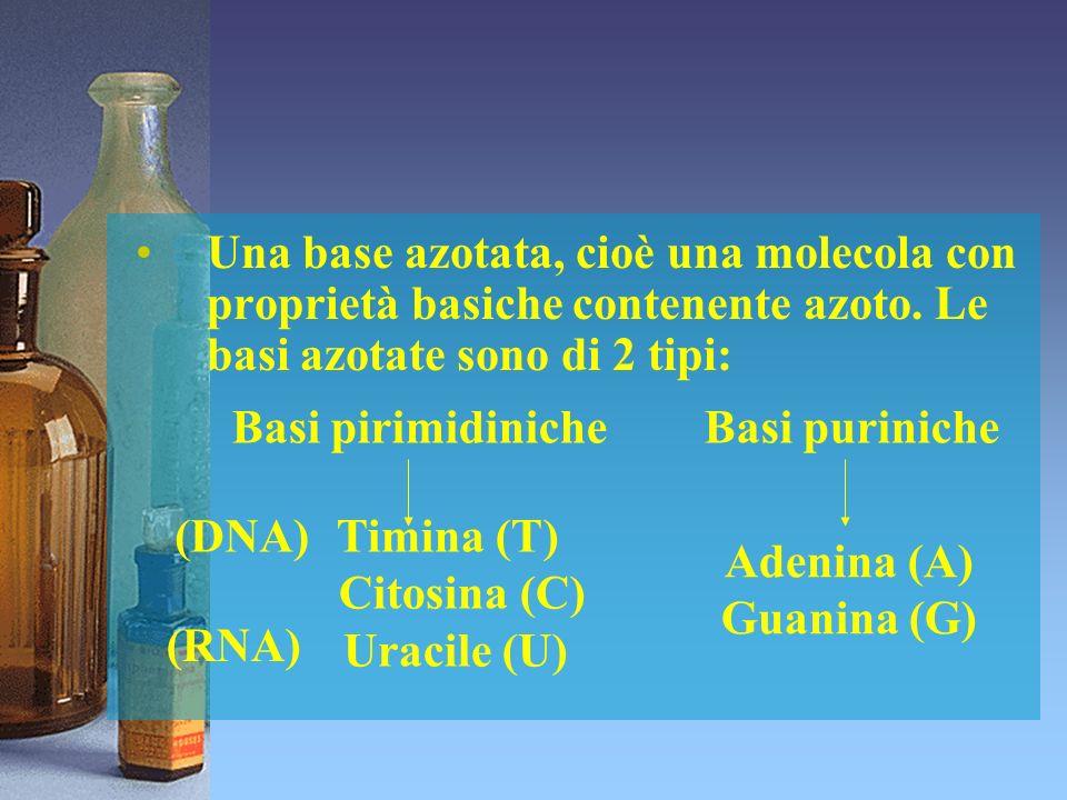 Una base azotata, cioè una molecola con proprietà basiche contenente azoto. Le basi azotate sono di 2 tipi: (DNA) (RNA) Basi pirimidiniche Basi purini