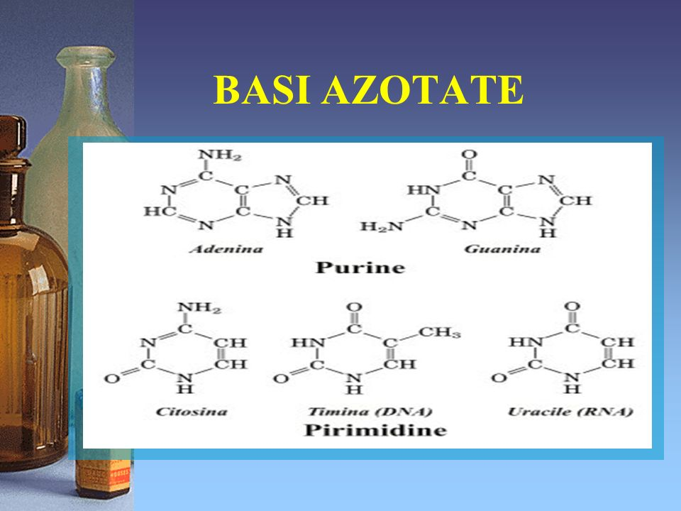 Un gruppo fosfato ( PO 4 ) Questa è la struttura generale di un nucleotide: 3