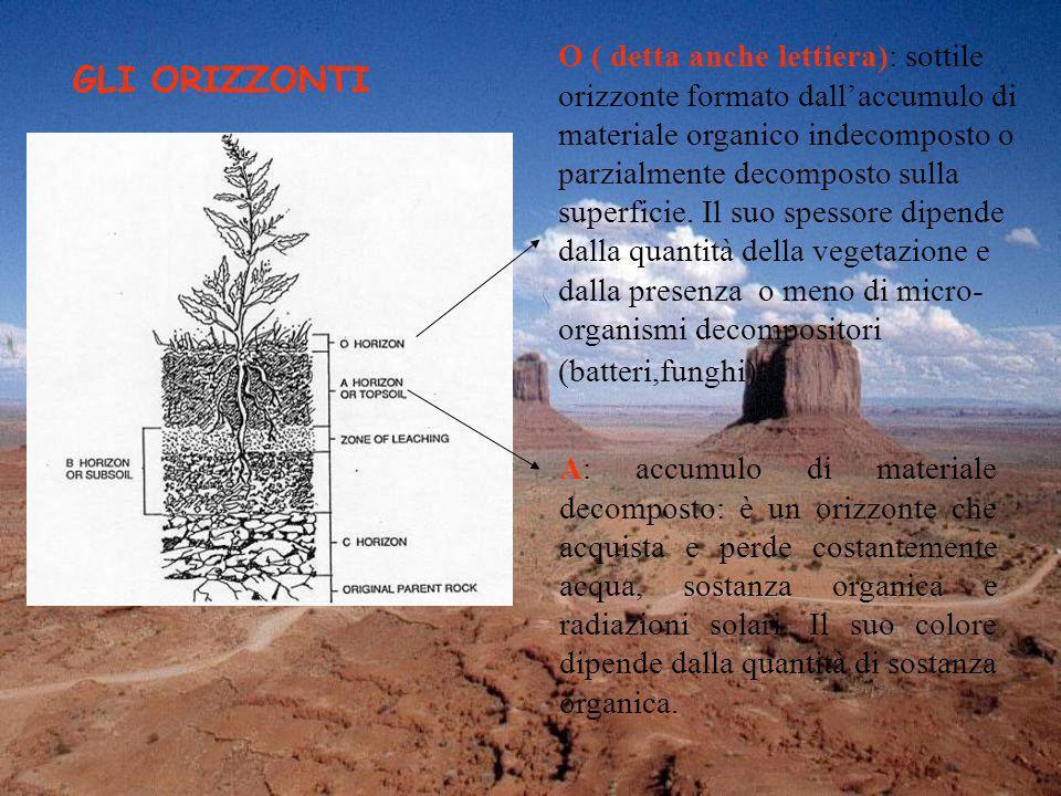 O ( detta anche lettiera): sottile orizzonte formato dallaccumulo di materiale organico indecomposto o parzialmente decomposto sulla superficie. Il su
