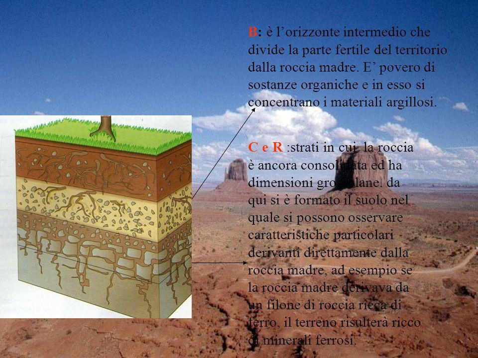 B: è lorizzonte intermedio che divide la parte fertile del territorio dalla roccia madre. E povero di sostanze organiche e in esso si concentrano i ma