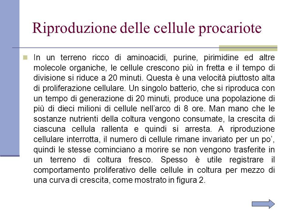 Riproduzione delle cellule procariote In un terreno ricco di aminoacidi, purine, pirimidine ed altre molecole organiche, le cellule crescono più in fr