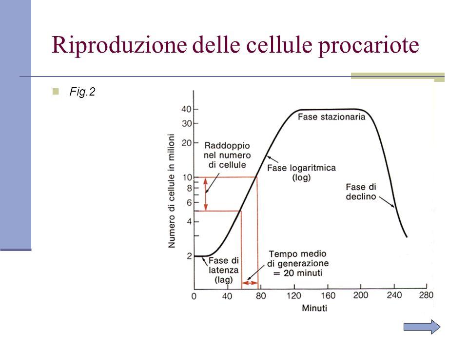 Riproduzione delle cellule procariote Fig.2
