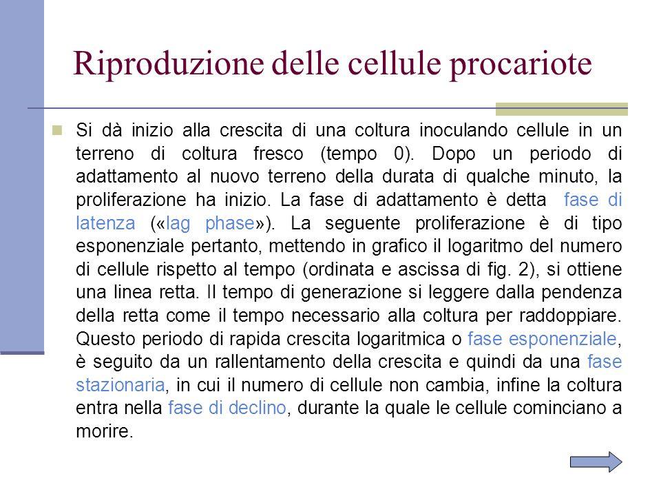 Riproduzione delle cellule procariote Si dà inizio alla crescita di una coltura inoculando cellule in un terreno di coltura fresco (tempo 0). Dopo un