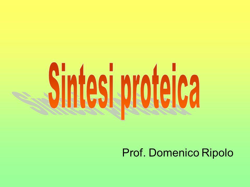 Cosè la sintesi proteica La sintesi proteica è il processo che porta alla formazione delle proteine utilizzando le informazioni contenute nel DNA.
