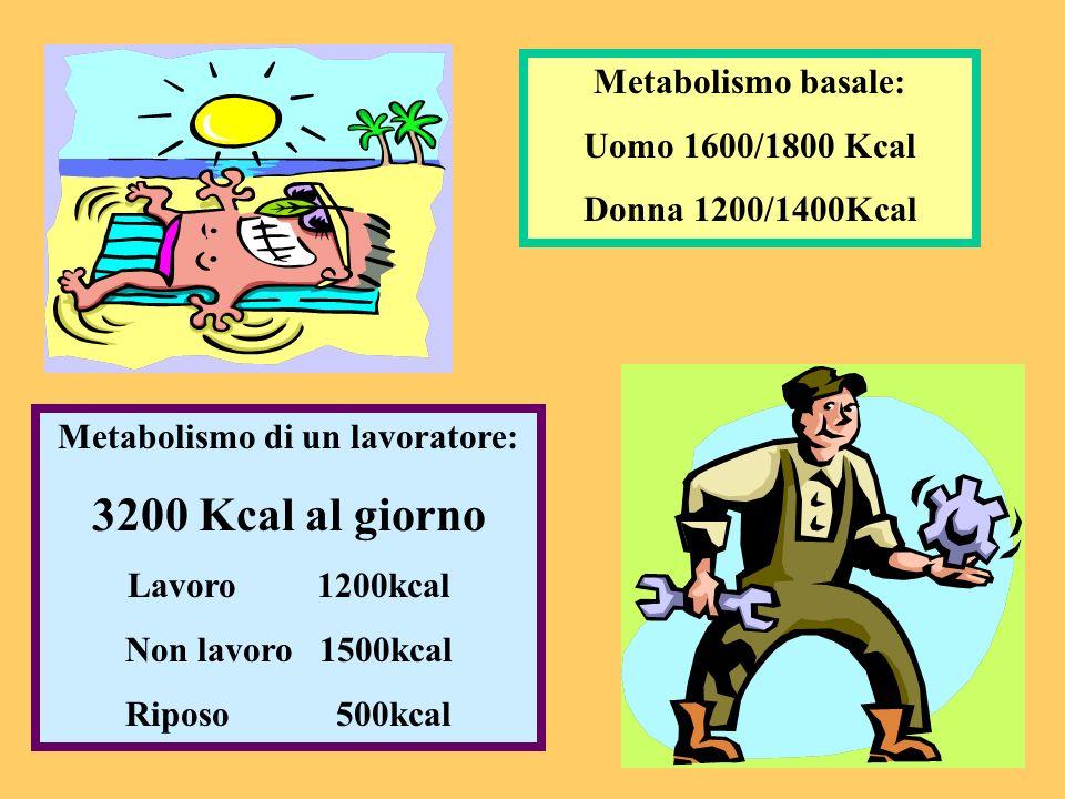 Metabolismo basale: Uomo 1600/1800 Kcal Donna 1200/1400Kcal Metabolismo di un lavoratore: 3200 Kcal al giorno Lavoro 1200kcal Non lavoro 1500kcal Ripo