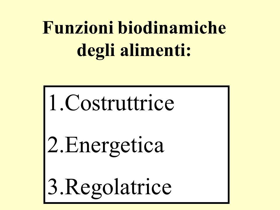 1.Costruttrice 2.Energetica 3.Regolatrice Funzioni biodinamiche degli alimenti: