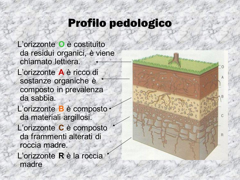 Profilo pedologico Lorizzonte O è costituito da residui organici, è viene chiamato lettiera. Lorizzonte A è ricco di sostanze organiche è composto in