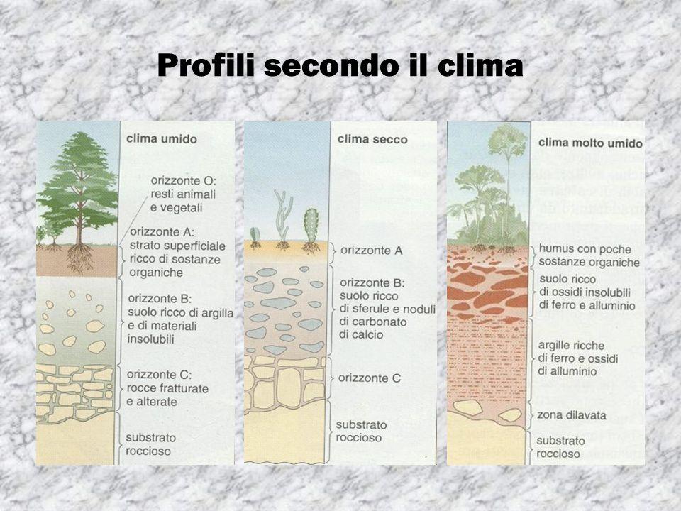Profili secondo il clima