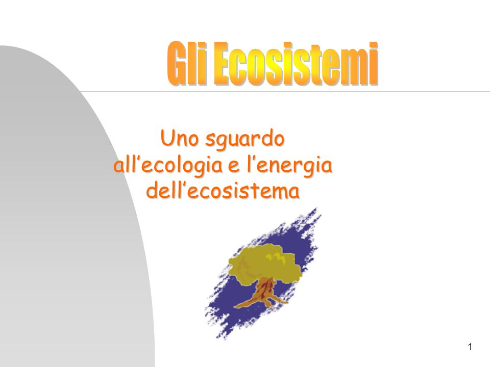 1 Uno sguardo allecologia e lenergia dellecosistema