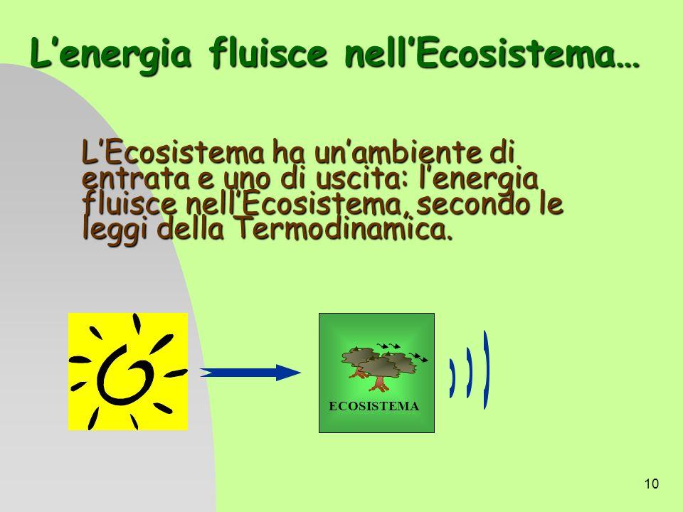 10 Lenergia fluisce nellEcosistema… LEcosistema ha unambiente di entrata e uno di uscita: lenergia fluisce nellEcosistema, secondo le leggi della Term